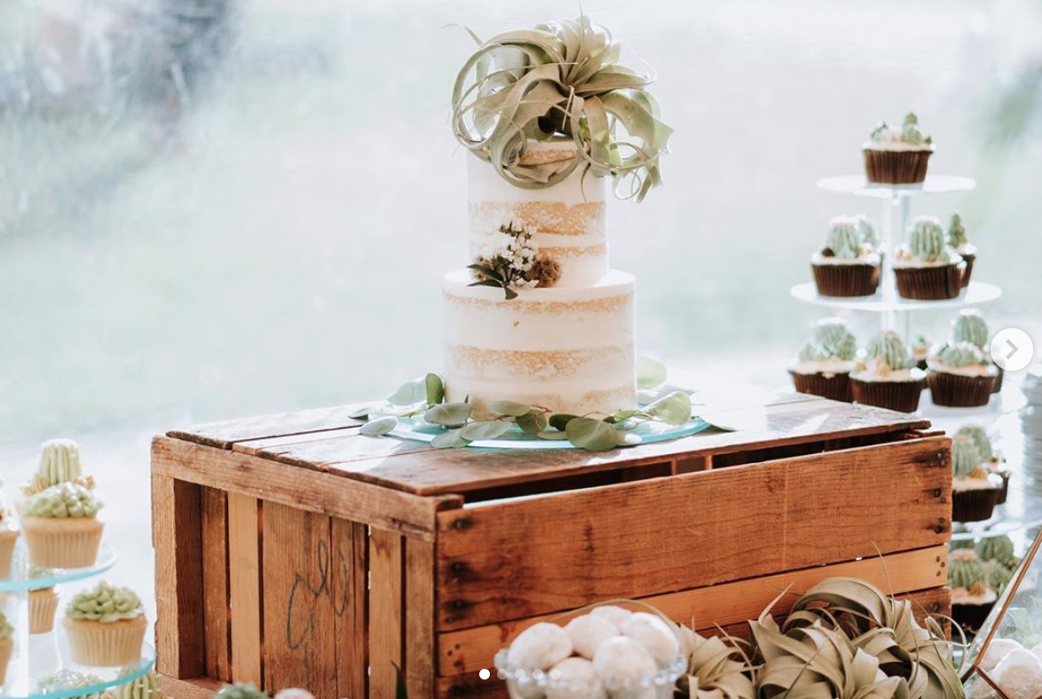 airplant cake, plant wedding cake, new mexico plant cake, new mexico cake